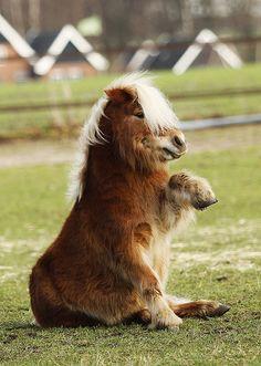 ponieeee tells you where he thinks you need to go. So cute!