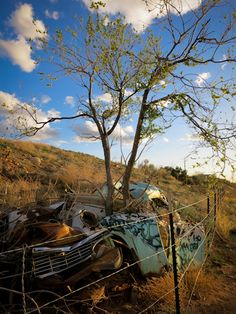 In New Mexico - a tree growing out of an old, rusted car