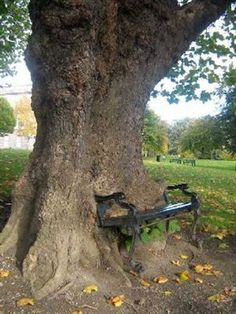 This tree is called The Hungry Tree Constitution Hill, Dublin Ireland