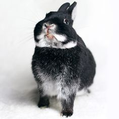 Happy Animals, Animals And Pets, Funny Animals, Cute Animals, Strange Animals, Dwarf Bunnies, Cute Buns, Cute Hamsters, Pets 3