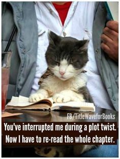 Image result for cats interrupting reading