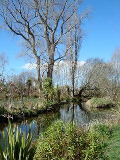 Styx Mill Conservation Reserve, Christchurch, NZ.