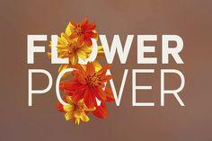 #FlowerPower - #Photos & Graphics by Cruzine on @creativemarket