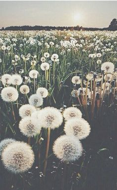 Image uploaded by ELLIE. Find images and videos about nature, flowers and wallpaper on We Heart It - the app to get lost in what you love. Jolie Photo, Pretty Pictures, Beautiful World, Beautiful Sky, Simply Beautiful, Wallpaper Backgrounds, Iphone Backgrounds, Iphone Wallpapers, Field Wallpaper