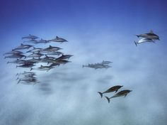 Intelligent Travel Photograph by Brian Skerry