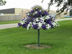 Petunias (tree )