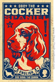 ENGLISH COCKER : Obey the pure breed! The Dog Revolution (I love my American Cocker!)
