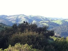 hike or bike @ Wildcat Peak, Tilden Park (this is the trailhead area at Inspiration Point)