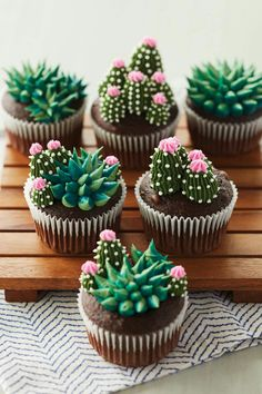 These succulent cupcakes are almost *too* cute to eat. 🌵😍 These succulent cupcakes are almost *too* cute to eat. 🌵😍 These succulent cupcakes are almost *too* cute to eat…. Cupcakes Succulents, Kaktus Cupcakes, Edible Succulents, Garden Cupcakes, Indoor Succulents, Propagating Succulents, Cacti And Succulents, Planting Succulents, Cupcake Recipes
