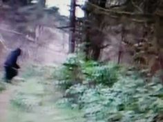 Bigfoot in Ohio clear video of the creature 2012