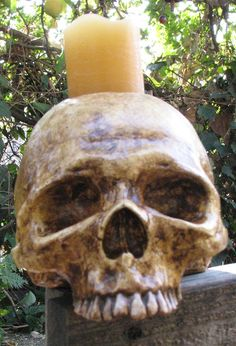 Aged Human Skull Candle Holder  Natural Style by macabrecreations, $45.00