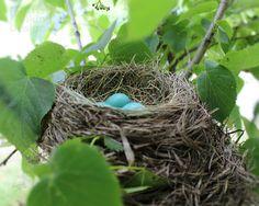 Robins Nest-nature photography print-nursery by IrishVikingDesigns