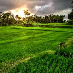 553 Best Bali images in 2019   Paisajes, Bali holiday deals, Bali lombok