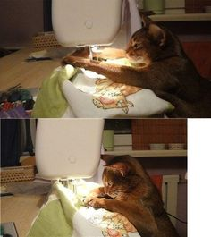 A real quilting cat