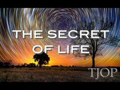 Want To Know The Secret Of Life? Watch This