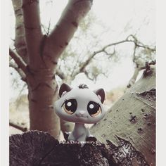 Lps pic 8