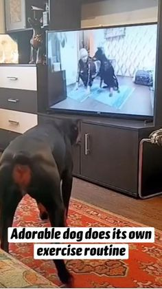 Cute Funny Dogs, Cute Funny Animals, Cute Animal Videos, Cute Animal Pictures, Funny Animal Jokes, Cute Little Animals, Animals Beautiful, Cute Puppies, Dog Videos