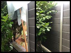 Keine Ecke ist zu schwierig für den unermüdlichen Gärtner - Sturmschaden am Sichtschutz beseitigen. Aquarium, Green Landscape, Privacy Screens, Environment, Aquarius, Fish Tank