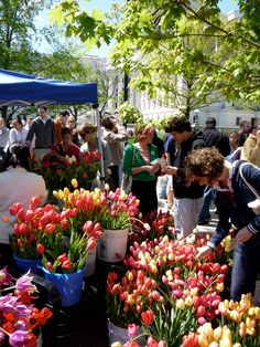 Dane County Farmers Market, Madison, Wisconsin Our favorite summer place! Midwest Vacations, Madison Wisconsin, Free Things To Do, Flower Market, Oh The Places You'll Go, Farmers Market, Travel Usa, The Good Place, Stuff To Do