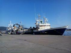 La Comisión Internacional para la Conservación del Atún Atlántico (ICCAT) acuerda el establecimiento de planes de recuperación para el pez espada del Mediterráneo