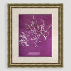 One of my favorite discoveries at WorldMarket.com: Purple Coral I
