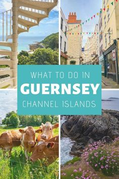 Visit the incredible island of Guernsey and enjoy a relaxing vacation packed with history! Guernsey island travel is amazing but here's what you need to know. Travel Tips Tips Travel Guide Hacks packing tour Guernsey Channel Islands, Guernsey Island, Places To Travel, Travel Destinations, Places To Visit, Island Travel, Travel Advice, Travel Tips, Travel Hacks