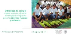 El trabajo de campo supone una gran fuente de empleos e ingresos para los jóvenes rurales y urbanos. SAGARPA SAGARPAMX #MéxicoAgroPotencia