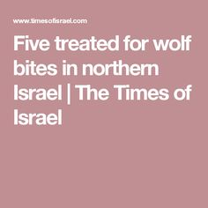 Five treated for wolf bites in northern Israel   The Times of Israel