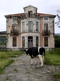 Abandoned In the Asturias region of northern Spain. Glad the cow has such a tame lawn for feeding on.