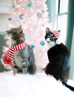 Merry Christmas, From Sgt. Pepper and Desmond