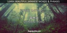 For Learners: 50 Beautiful Japanese Words & Phrases Pt. 7 Beautiful Japanese Words, Beautiful Words, Shinrin Yoku, Japanese Phrases, Third World Countries, Forest Bathing, When You Are Happy, Sand And Water, Japanese Language
