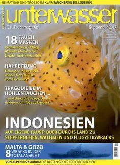 #Hai-#Rettung: Geborgen, geschlüpft, wieder frei: Hai-Eier vom #Fischmarkt 🦈🐠 Jetzt in #Unterwasser. #diving #fish