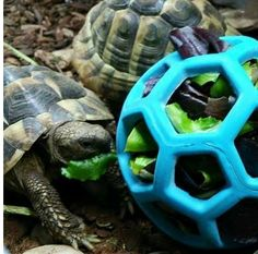 Veggie Ball