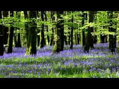 8 Hour Nature Sound Relaxation-Soothing Forest Birds Singing-Relaxing Sleep Sounds-Without Music - YouTube