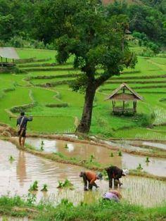 Nice Pic Village Photography, Nature Photography, Beautiful World, Beautiful Gardens, Wonderful Places, Beautiful Places, Vietnam, Indian Village, Fishing Villages