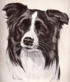 Border Collie - watercolour dog portrait, painting by artist Anne Zoutsos