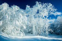 Winter In Tucker County, WV