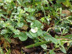 Rain drops on green leaves.