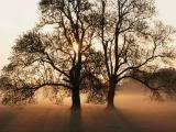 Tree and sunset.