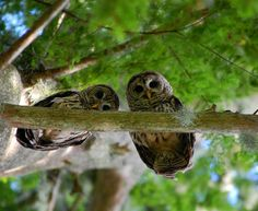 owls perched above