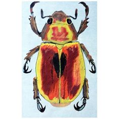 Escarabajo.