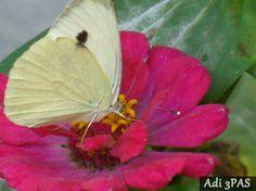 Un gand de-un fluture am agatat Sa il trimit la tine am sperat Dar a fost greu, era incarcat de dor Si l-a scapat, taman pe un bujor  Singur ramas, s-a speriat Si de-o albina el s-a agatat Aceasta i-a adaugat putin nectar A simtit ca era un pic amar  Si la adus la tine in gradina L-a agat
