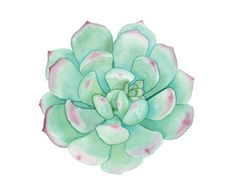 Watercolour Succulent Illustration by WatercolourMusings on Etsy