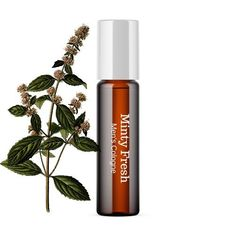 Aromatic Minty Fresh cologne created with natural ingredients to keep you smelling great all day!. Roller bottle makes it easy to apply and to carry and reuse during the day if desired. Bottle is 10 ml with a steel roller. Simply apply on wrists and/or behind ears for optimal scent. Ingredients include coconut oil, peppermint, wintergreen and rosemary essential oils. Pairs well with our Minty Fresh Beard Oil. The Body Shop, Wellness Tips, Health And Wellness, Sephora, Amber Bottles, Beard Oil, Diffuser Blends, Natural Living, Natural Remedies