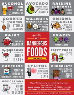 Dangerous foods for dogs cheat sheet. We keep one of these on our fridge at home. It's a great print-out to look at and have handy if you are unsure if your dog can have a specific food. This guide also tells you why each food is toxic f...