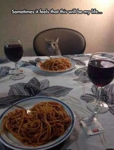 The Best Funny Pictures Of Today's Internet  #funny #pictures #photos #pics #humor #comedy #hilarious #joke #jokes #cute #cat #cats #animals