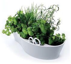 contemporary plants by shop.royalvkb.com