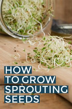 Learn how to grow your own healthy sprouts. Growing sprouts indoors is so easy and a great winter activity for gardeners. Great for soups, sandwiches, and salads!
