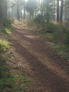 walk 01-01-2016 early morning in Leenderbos near Leende