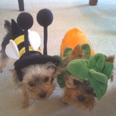 Adorable pet costumes